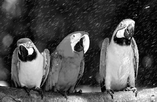 高温来袭之际,冰块,冲凉水澡等人类对付夏季高温的招数也纷纷用在动物