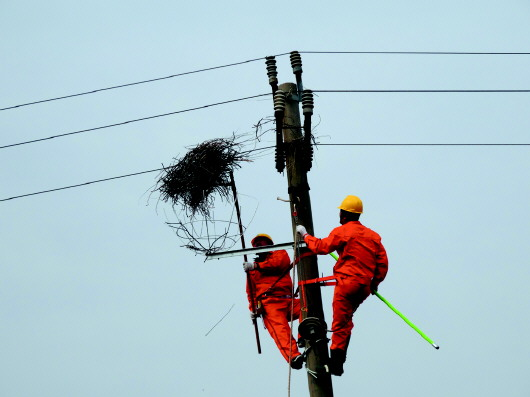 本报通讯员 段德咏 郭轶敏     本 报 记 者 李 振   喜鹊是吉祥的象征,喜鹊进家门更被中国人认为是好兆头。不过对于室外的电力线路和设施,喜鹊巢却成为危险的定时炸弹喜鹊巢里的树枝、金属丝一旦接触到导线就会引起电力事故。为此,见鸟就赶、见窝就拆成了电力线路巡线工人重要的工作之一。不过在垦利,这样的场景或许将不复存在。住进了架设在电线杆上的安全鸟巢,黄河入海口的喜鹊们终于能与电力设施和谐共处了。   碧绿的野大豆、婆娑的柽柳、泛红的碱蓬,空中飞鸟翩翩,盛夏的黄河入海口一片生机盎然。