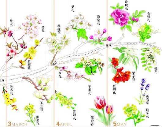 济南春季赏花指南 - 古藤新枝 - 古藤的博客