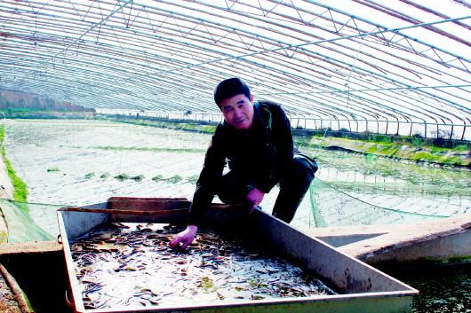 禹城市最大规模泥鳅养殖基地,总投资100余万元,占地150亩,除温室大棚