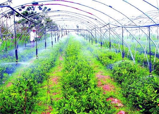 茶园节水灌溉-良心谷 的 良心梦