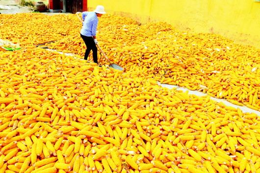 玉米种植业结构调整