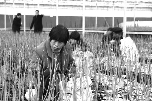 诸城市万景源农业科技有限公司总经理侯志刚是这里的负责人,他告诉