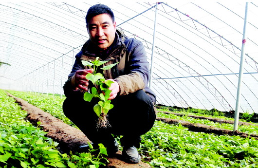 农业供给侧结构