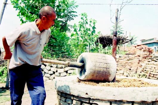造纸是中国四大发明之一,至今已有1900多年的历史。在造纸业飞速发展、人类文明高度发达的今天,手工造纸作坊早已销声匿迹,但其印记仍然依稀可循。   上世纪八、九十年代前,在高青县青城、木李一带,有不少村民借当地的蚕桑资源开办造纸作坊,沿用最传统的手工工艺生产毛头纸,用来包装水果、蔬菜,出口国外。由于纸张绵软,拉力大且环保,很受客户欢迎。直到20世纪末,手工造纸由于工序繁杂、效率低下、利润薄而被时代淘汰。    本报记者 程芃芃 马景阳    本报通讯员 张维堂 石晓静 古老文明的活化石   197