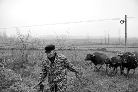 在确山县竹沟镇西李楼村,村民张妮家门口的一片地长满青草.