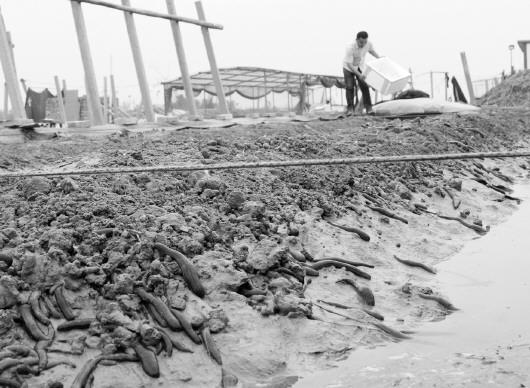 首页 大众日报 区域聚焦    5月3日,阳谷县徐集黄河水蛭养殖园区内