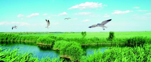 发挥生态优势突出绿色发展全力打造省会济南后花园   齐河:生态梦想在这里启航 - 平阴玫瑰甲天下 - 我心永恒博客乐园 平阴玫瑰甲天下