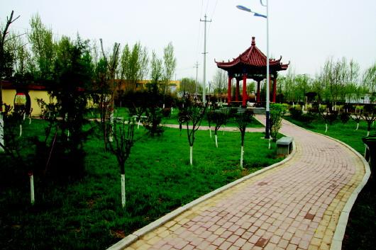 聊城的生态宣言:创建国家森林城市