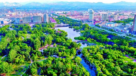 创绿色森林城市手抄报