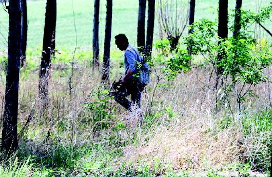 一有时间,李良便跋涉于山间野地,寻找枯树根.