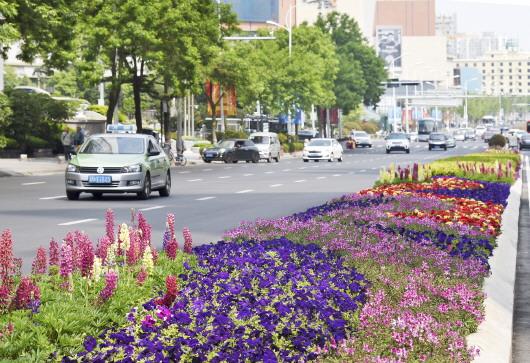 青岛采取临时道路交通管理措施