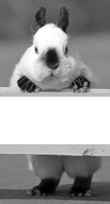 兔子组装步骤图解