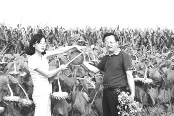 五种作物间种 亩均增收500元 - 平阴玫瑰甲天下 - 我心永恒博客乐园 平阴玫瑰甲天下